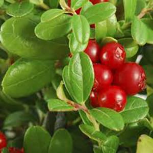 Frutos rojos, arandano rojo, antiarrugas